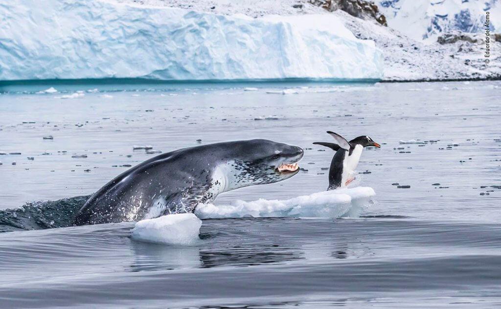 Ha a pingvinek tudnának repülni