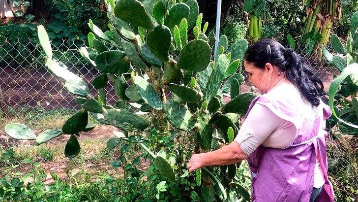 mexikói nagymama